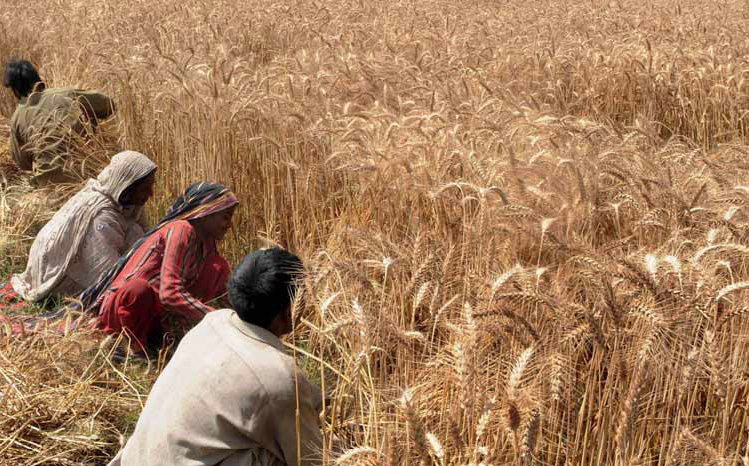 Asian agribulk Bumper harvest feeds Indian optimism